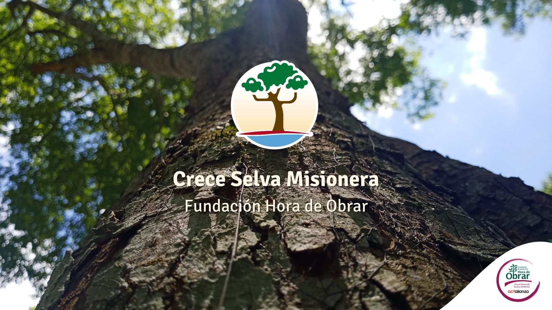 Crece Selva Misionera