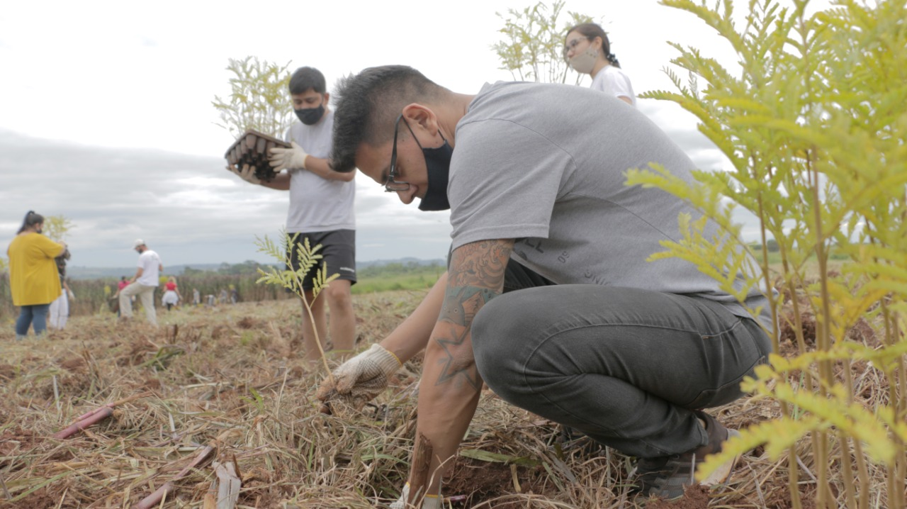 CSM Puerto Rico plantacion masiva 7